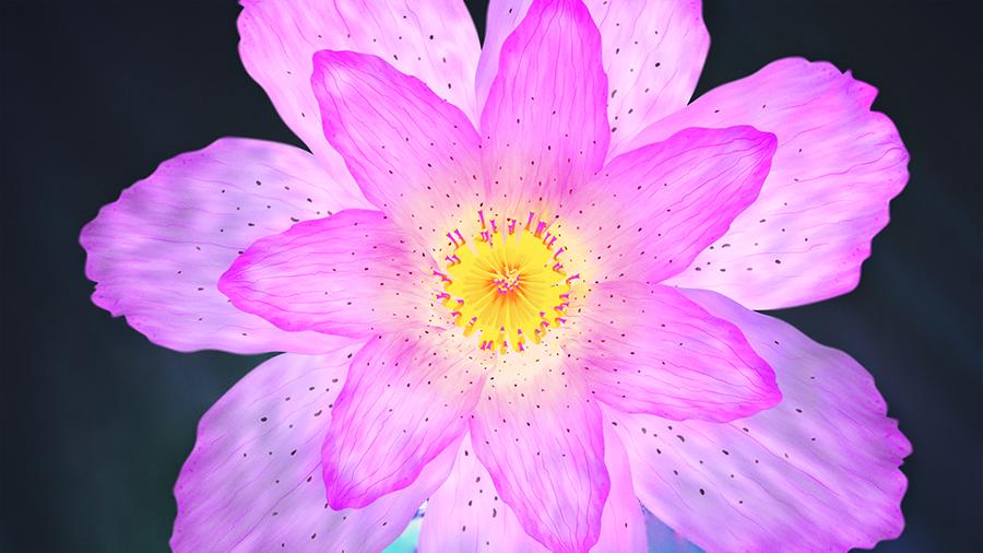 Cinema 4D Roadshow 2016 - Flower Bloom Animation: Animating the Flower Bloom